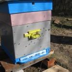 весенний лет пчел