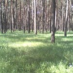 мед лесной