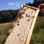 печатный мед