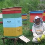 я и мои пчелки
