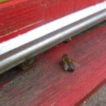 прилетная доска и пчелки