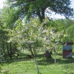 весенний взяток на пасеке