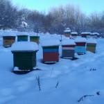 Чистка летков от снега. Зимовка пчел в многокорпусных ульях. Зима 2015 год.