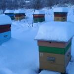 Многокорпусные улья зимой. Зимовка пчел в многокорпусных ульях.