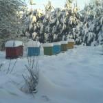 Улья зимой 2015 год. Пасека №2. Зимовка пчел в лежаках 2015 год