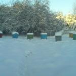 Улья лежаки зимой. Зимовка пчел в лежаках 2015 год