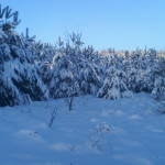 снежная зима. зимовка пчел 2015 год